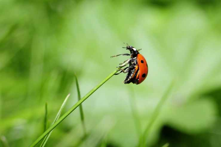 ladybug-insect-nature-meadow.jpg
